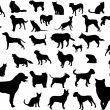 Cats and dogs — Stock Vector