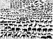 Different animals — Stock Vector