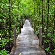 Royalty-Free Stock Photo: Mangrove forest Boardwalk