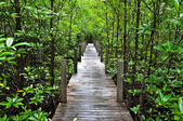 Mangrove forest Boardwalk — Stock Photo