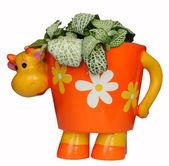 Cow-like flowerpot with fittonia in it — Fotografia Stock