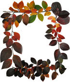 Frame of coloured leaves on white — Stock Photo
