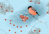 Bullfinch on ashberry (vector) — Vector de stock
