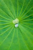 Waterproof on a leaf — Stock Photo