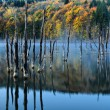 Beautiful autumn lake view — Stock Photo #3960983