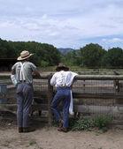 Feeding the Livestock — Stock Photo