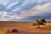 Alone tree in desert — Stock Photo