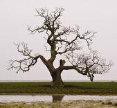 Dead tree — Stock fotografie