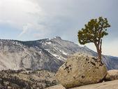 Yosemite — Stok fotoğraf