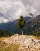 Tree on the rock — Stock Photo