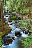 Forest CREEK WITH HIKING TRAILS — Stock Photo