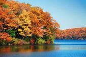 Göl üzerinde sonbahar yaprakları — Stok fotoğraf