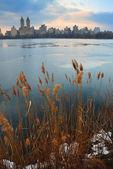 在黄昏,纽约中央公园 — 图库照片