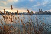 Coucher du soleil de central park, new york city — Photo