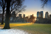Central park mit sonnenuntergang, new york city — Stockfoto