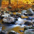 Autumn creek woods — Stock Photo