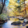 Autumn woods with creek — Stock Photo