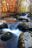 Autumn creek foliage and rock — Stock Photo