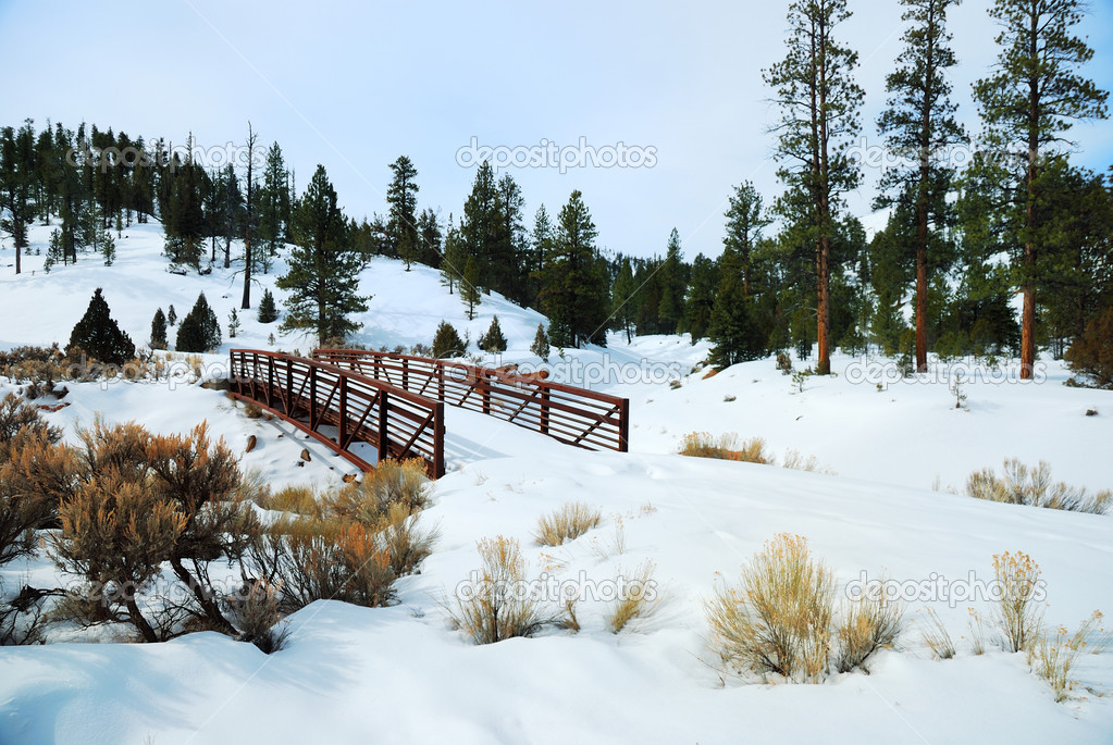 Bridge with trees in snow field in winter.  Stock Photo #4025756