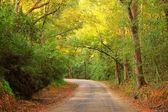 Scenic Country Road — Stock Photo