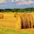Hayfield - Stock Photo