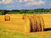 Hay field in late afternoon sunlight. — Stock Photo