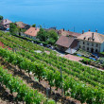 Lavaux Vineyard Terraces — Stock Photo #5222380