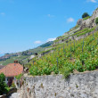 Lavaux Vineyard Terraces — Stock Photo