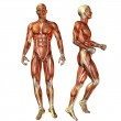 Muscle man in a standing pose — Stock Photo