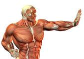 Constructor de cuerpo muscular en la lucha contra la postura — Foto de Stock