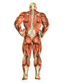 Muscle Body Builder view back — Stock Photo