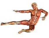 Studie svalů člověka udělat skok — Stock fotografie