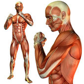 Muscle man pose in fighter — Stock Photo