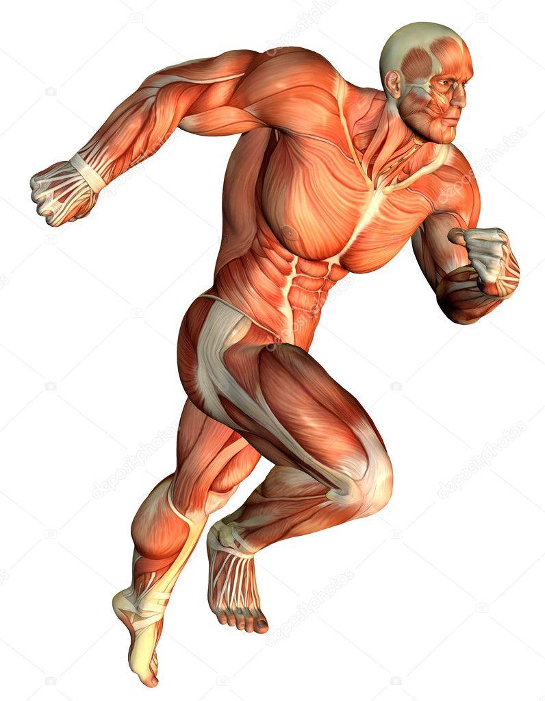Muscle galloping Body Builder — Stock Photo © DigitalArtB