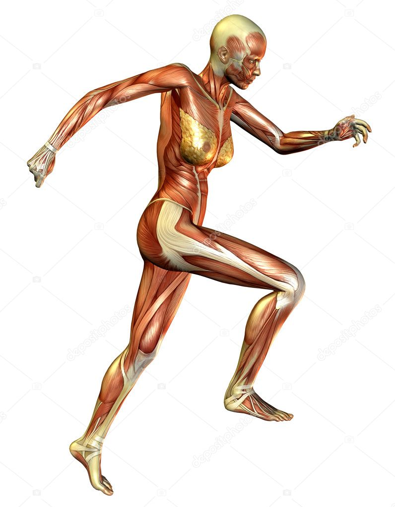 current study, muscle woman — stock photo © digitalartb #4024933, Muscles