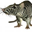 Surreal Zebra rat — Stock Photo