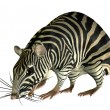 Fantasy rat in Zebra Look - Foto de Stock  
