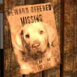 Miss-indicate for a missed dog - MISSING Dog — Photo