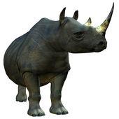 African wild rhino — Stock Photo