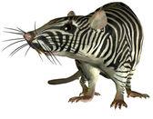 Surreal Zebra rat — Stock Photo