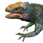 Lizard — Stock Photo