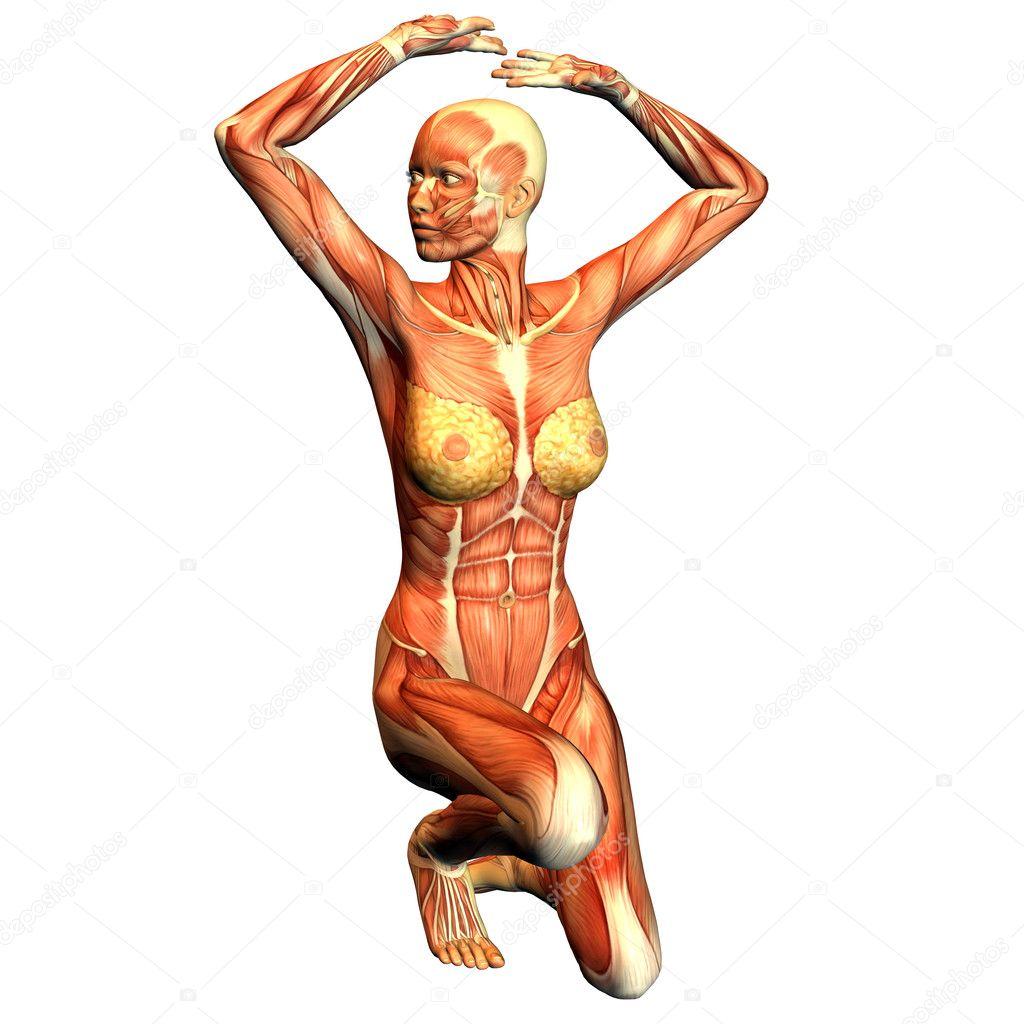 Анатомия девушек фото