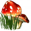 Two fly mushrooms in the grass — Stock Photo