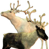 Two reindeers — Stock Photo