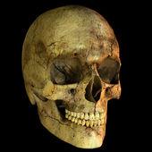 Illustration of human skull — Stock Photo