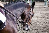 Horse dressage — Stock Photo