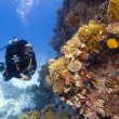 Stock Photo: Diver and coral