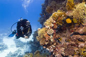 Diver and coral — Stock Photo