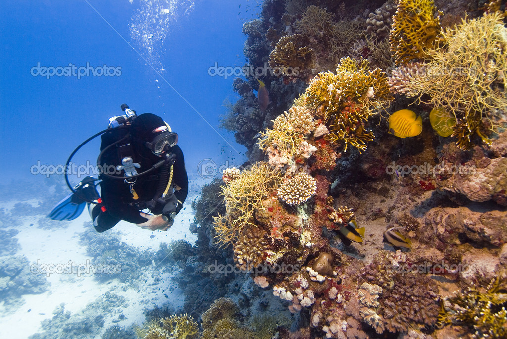 Diver with colourful coral in the Red Sea — Stock Photo #3965238