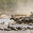 Great Migration - Stock Photo